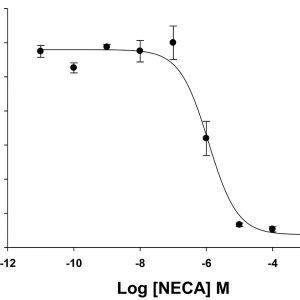 Adenosine A2B Receptor Cell Line