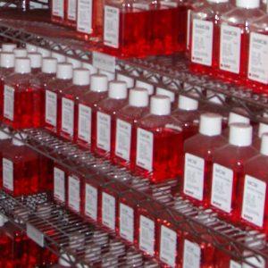 Osteoblast Medium