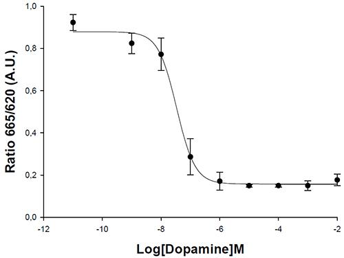 HiTSeeker D1 Dopamine Receptor Cell Line