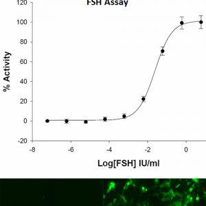 FSHR Cell Lline