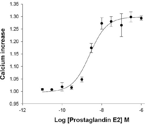 EP1 Prostanoid Receptor Cell Line