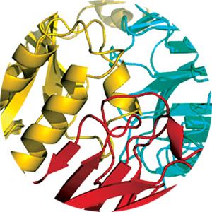 Cholecystokinin Receptors