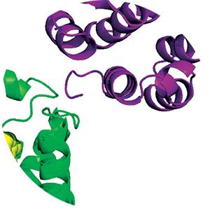 Glycoprotein hormone receptors