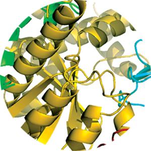PACAP receptors