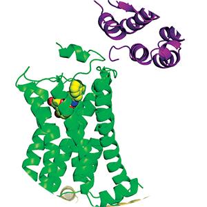 Urotensin receptors