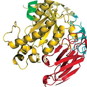 Thyrotropin-releasing hormone receptors
