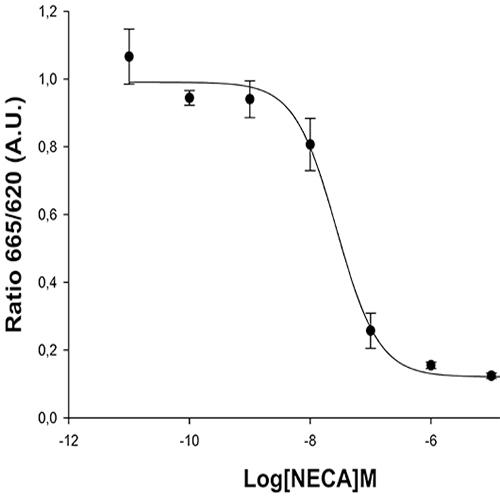 Adenosine A2A Receptor Assay
