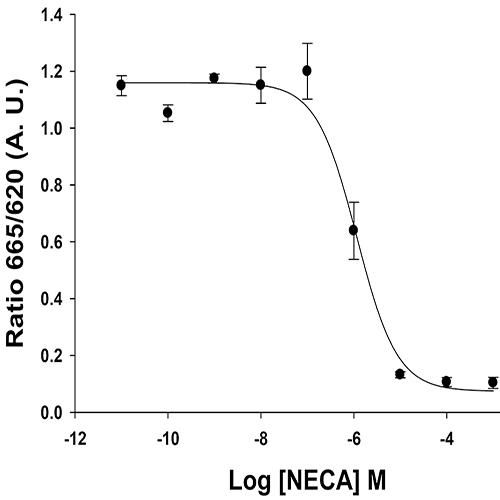 Adenosine A2B Receptor Assay