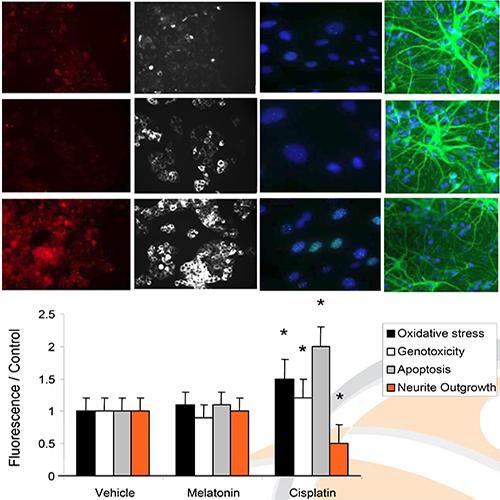 Neurotoxicity Assay